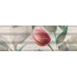 Ibero Next Vega Tulip A S-81 25x75