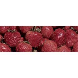 Ibero Waves Strawberry A s-50 25x75